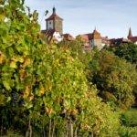 Vineyards at Rothenburg ob der Tauber