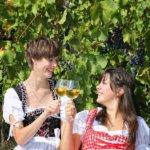 Rothenburg ob der Tauber: Vineyard