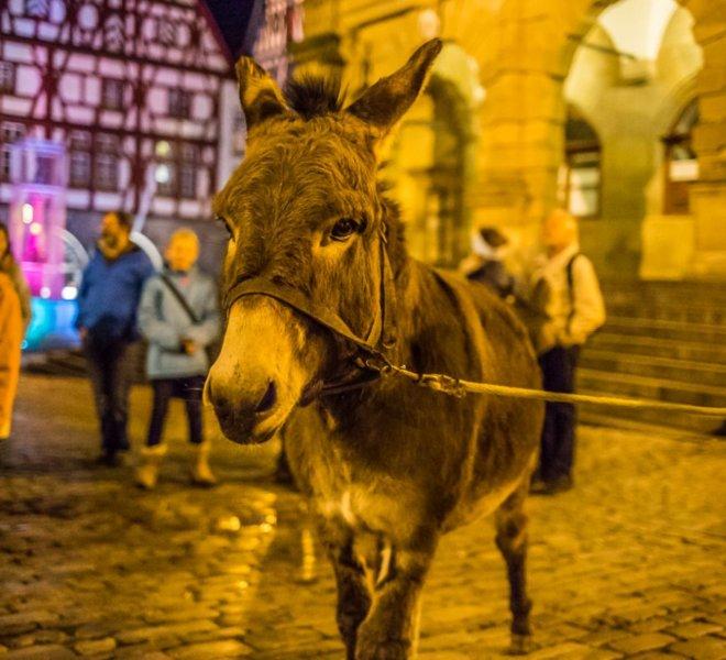 Märchenverführung mit Eseln beim Rothenburger Märchenzauber