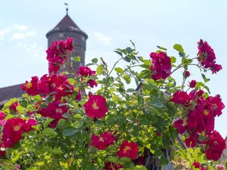 Rothenburger Gartenparadiese
